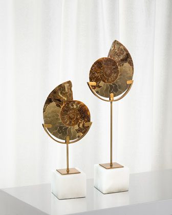 Standing Ammonite  Small and Matching Items