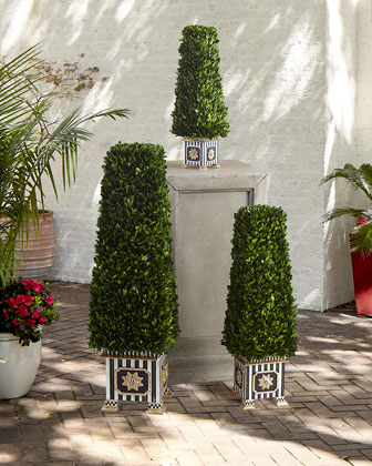 Preserved Boxwood Obelisk Topiary
