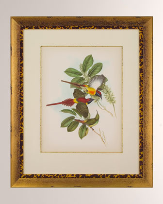 Gould Birds of the Tropics II Giclee Wall Art and Matching Items