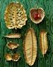 Red Oak Nut Dish