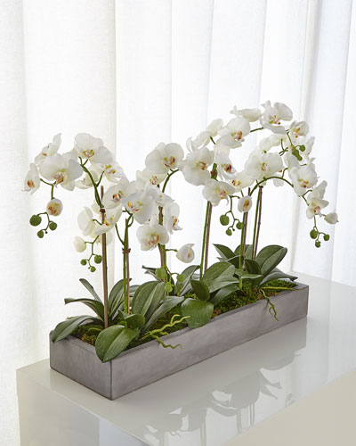 Orchid Phalaenopsis White Planter Concrete Fin