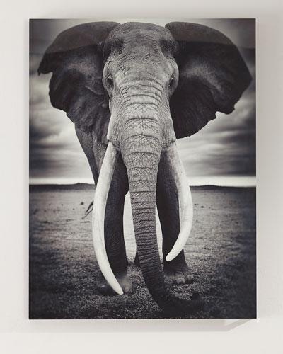 Rafiki Photography Art Print on HD Metal w/ Acrylic Backer