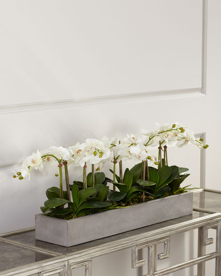 Orchid Phalaenopsis Floral Arrangement in Concrete Planter