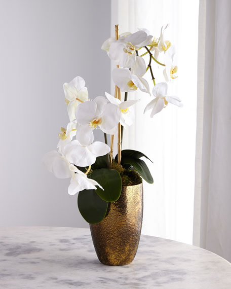 John-Richard Collection Golden Ombre Orchid Arrangement