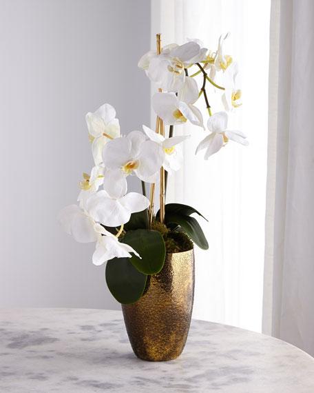 Golden Ombre Orchid Arrangement