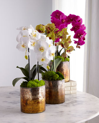 Orchids in Bronze Mercury Container