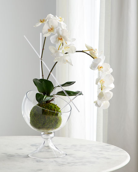 John-Richard Collection Natural Phalaenopsis Arrangement