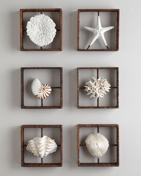 Plato Coral Shadowbox