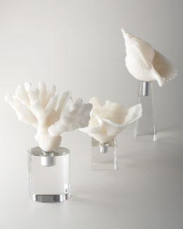 White Coral and Shell Sculptures