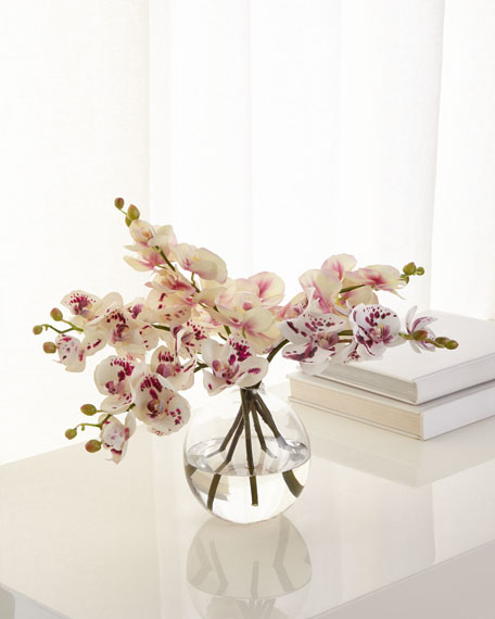 NDI Orchid Phalaenopsis Glass Bubble