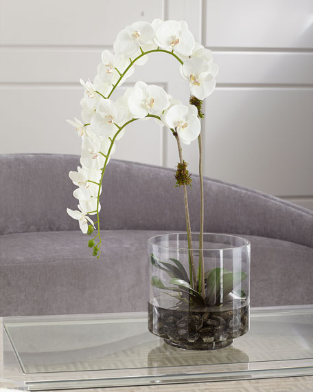 NDI Orchid Phalaenopsis in Glass Container