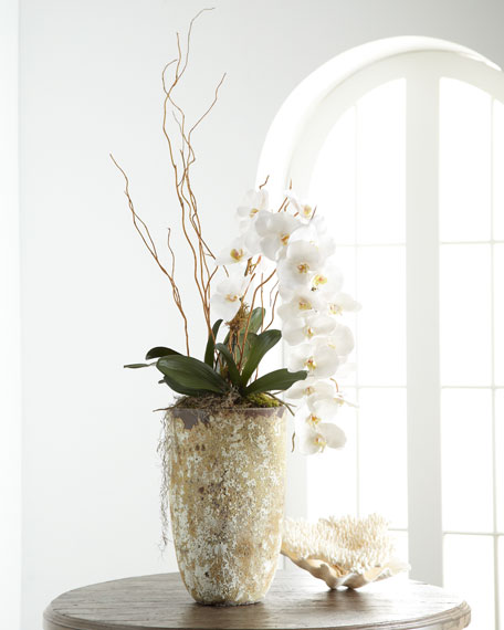 White Orchid in Stone Planter