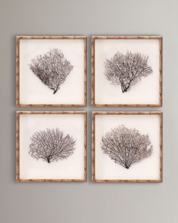 Framed Sea Fans