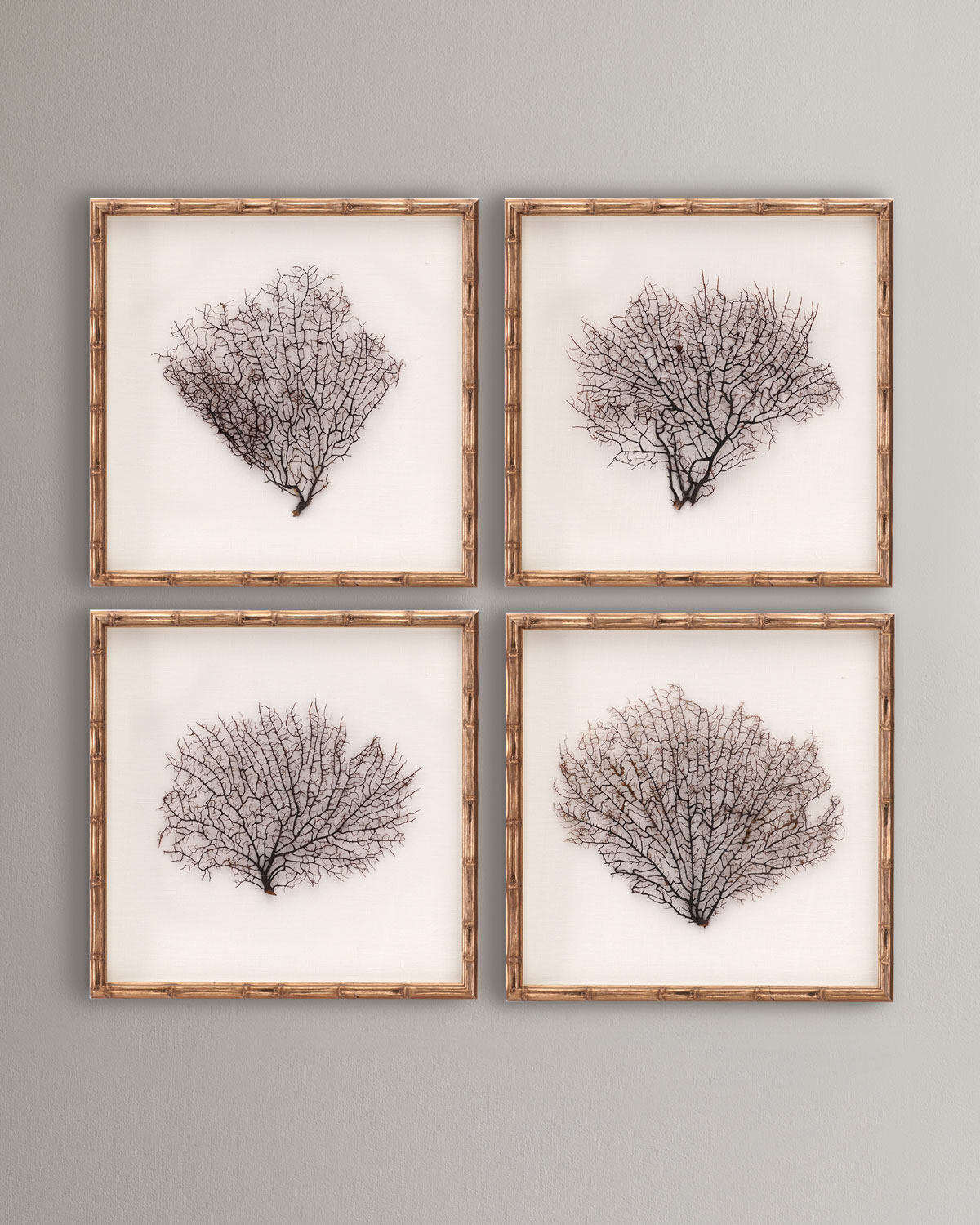 Framed Sea Fans, 4-Piece Set