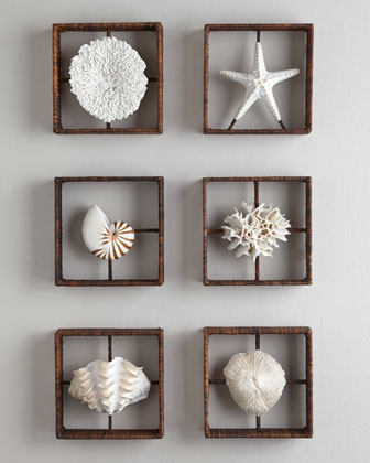 Clam Shadowbox